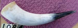 Large Cow horn that was listed on eBay